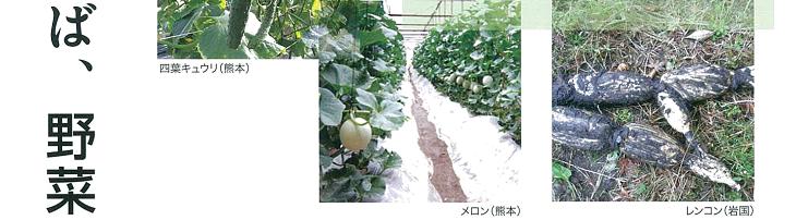 土の力が作物を変える