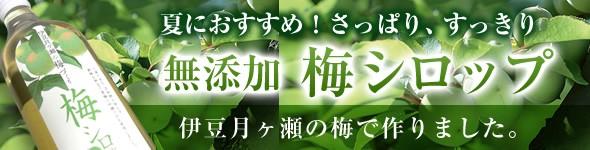 梅シロップ 伊豆月ヶ瀬の梅で作りました。