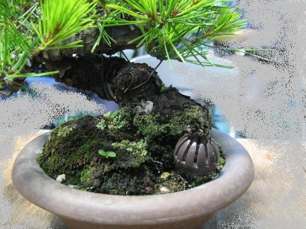 菜園プランター プチドーム 盆栽肥料入れ