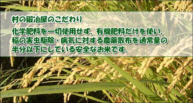 新潟コシヒカリ、白米、玄米