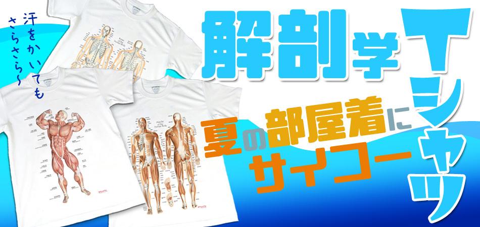 解剖学Tシャツ さらっさらの着心地 部屋着にぴったり!