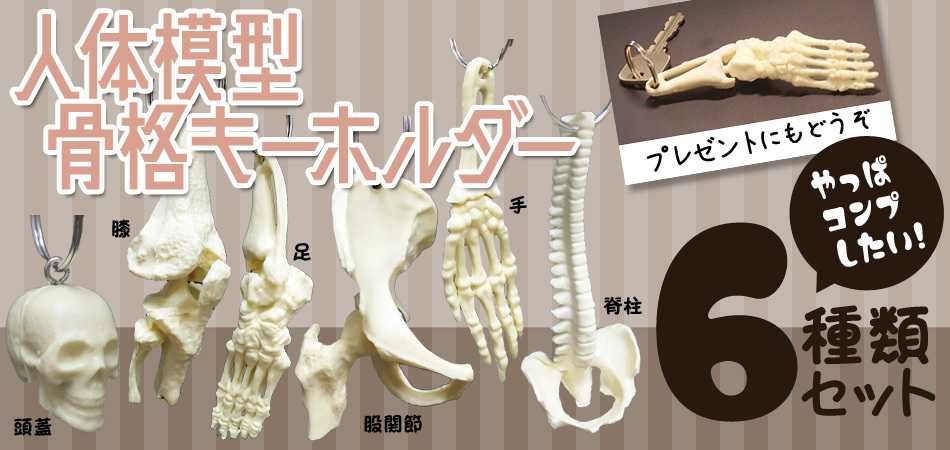 骨格キーホルダー(頭蓋骨・脊柱・股関節・手・足・膝関節)6種類セット