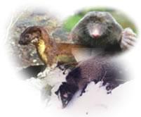 イタチ、タヌキ、モグラ、ハクビシンなどの小動物対策商品