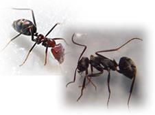 アリ駆除、アリの巣退治、アリ駆除殺虫剤
