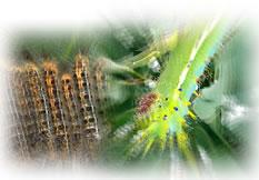 毛虫対策用殺虫剤