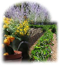 園芸用農薬・殺菌剤