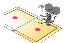 強力な粘着のりでネズミ捕獲