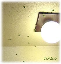 壁面のカメムシ駆除