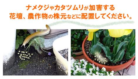ナメクジ駆除 ナメトールは花壇、農作物の株元などに配置