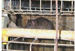 ネズミ忌避 ナラマイシンMCエアゾールでネズミからの害を守ります
