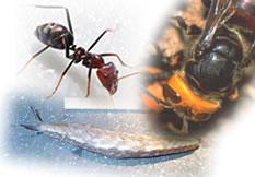 その他害虫対策用資材、殺虫剤