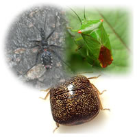 カメムシ駆除用殺虫剤
