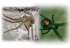 クモ駆除用殺虫剤、資材