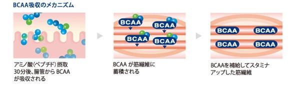 BCCA吸収のメカニズム