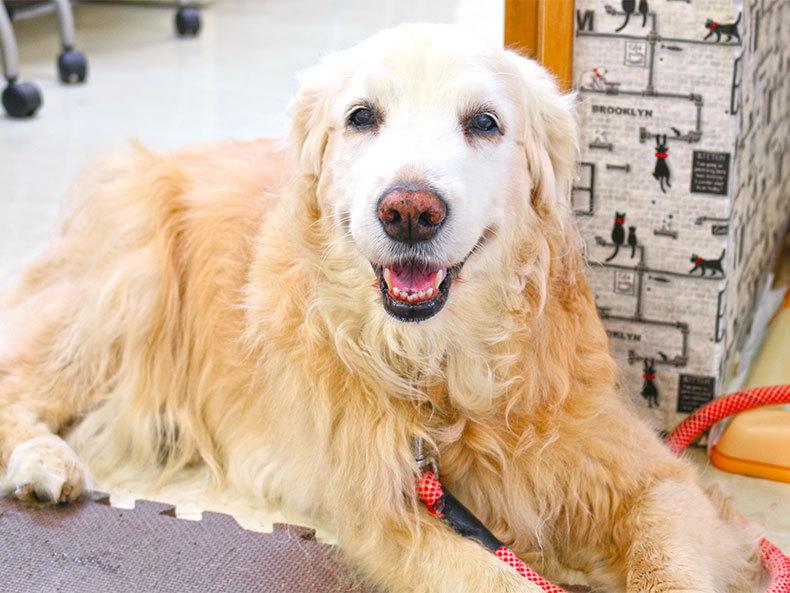 名張動物霊園の看板犬「愛ちゃん」