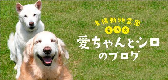 愛ちゃんとシロのブログ