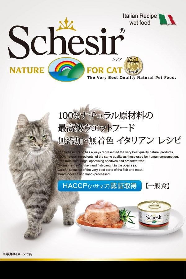 シシア猫用トップページ