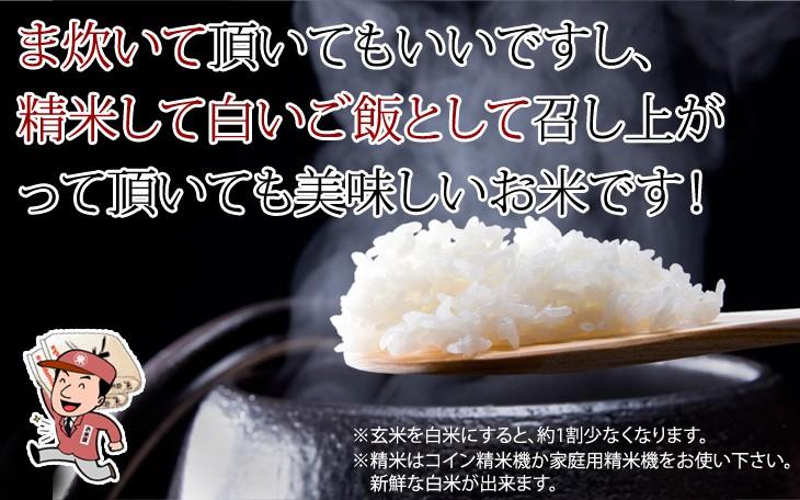 玄米 真空パック