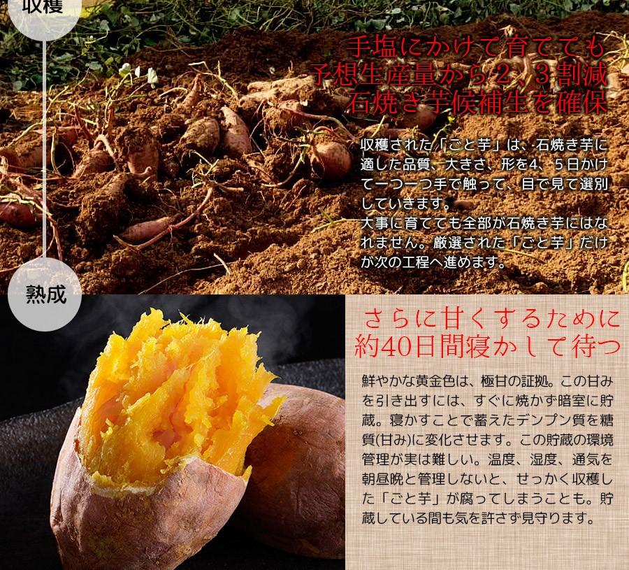 ポイント2:甘い芋ができる