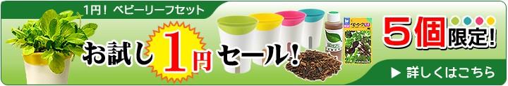 1円ベビーリーフポット付