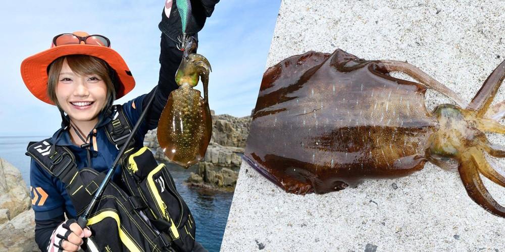エギングで釣れるイカの種類。メインはアオリイカ!