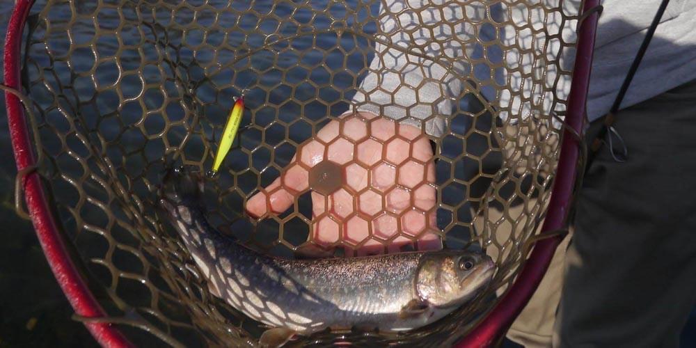 便利装備:魚を傷つけないためのラバーネットは準備しておきたい!