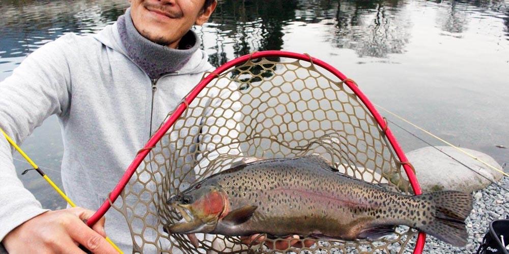 どんな魚が釣れるの?