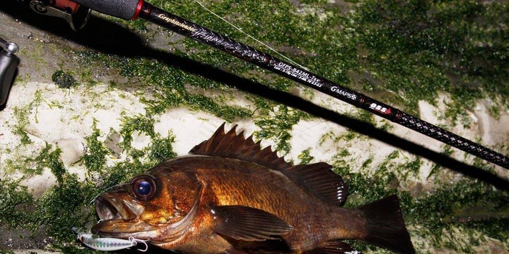 これだけは揃えよう!メバル釣りに必要な道具と装備