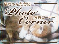猫ちゃんたちの写真コーナー