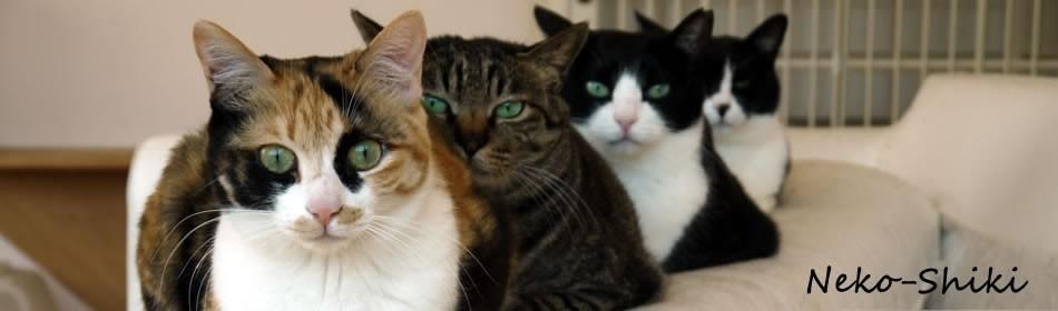 里親募集型の猫カフェやってます