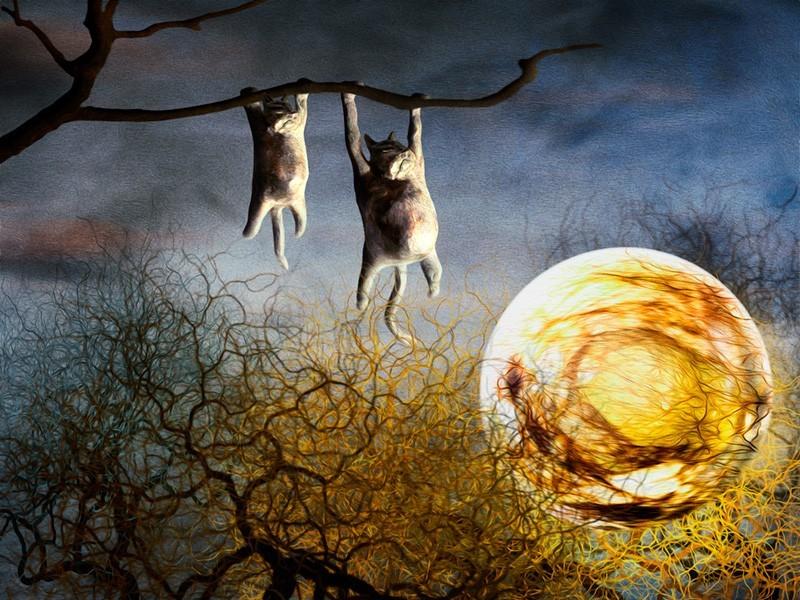 「夜中のひなたぼっこ」月でおなかをあぶるネコの絵