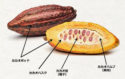 カカオフルーツチョコレート イメージ