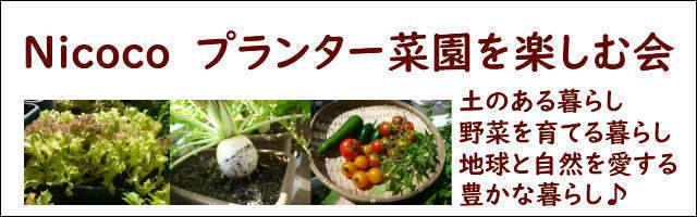 Nicoco プランター菜園を楽しむ会 土のある暮らし♪