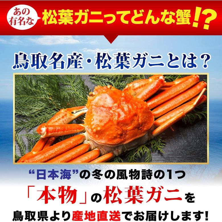 訳有り 松葉ガニ 鳥取 ブランド 蟹