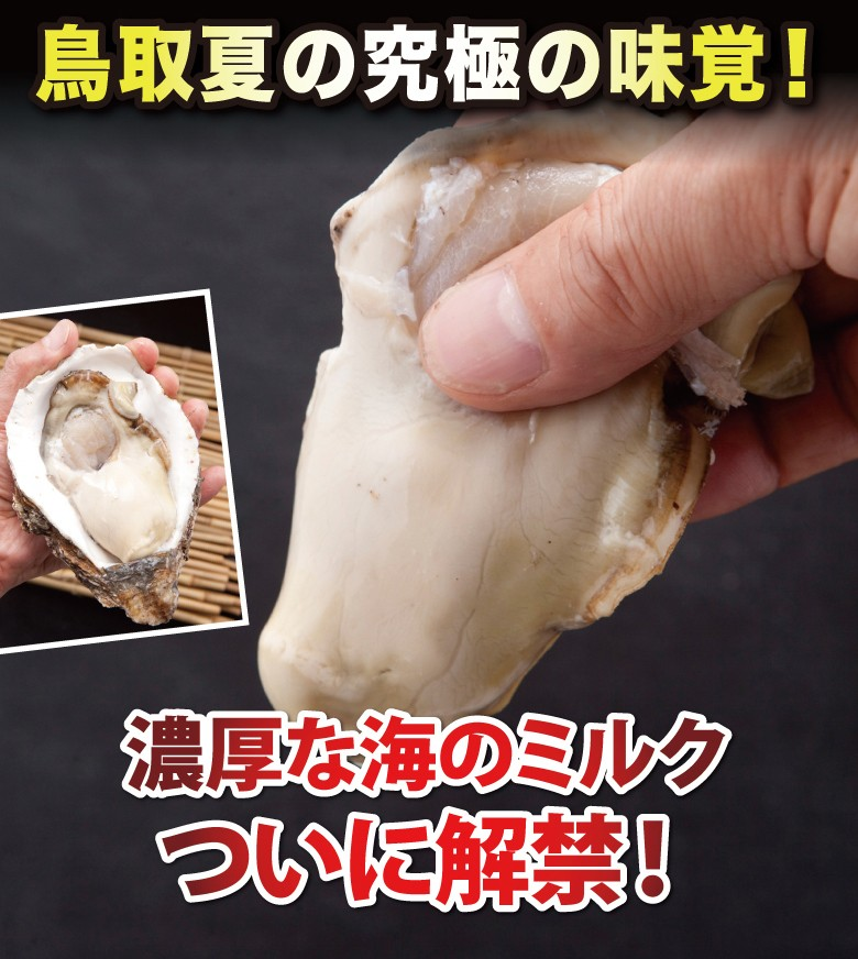 夏輝 通販 鳥取 岩がき 牡蠣