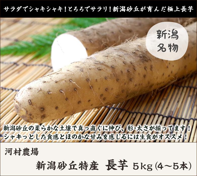 河村農場の長芋