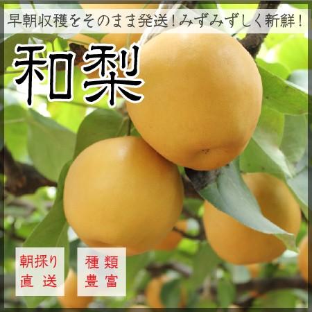 いしぐろ農園の和梨