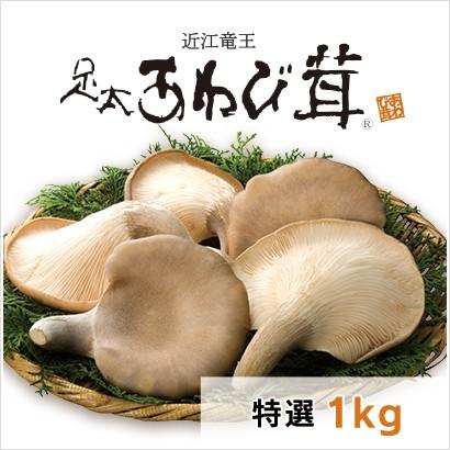 足太あわび茸 特選1kg