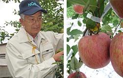 成田りんご園 陽向果(ひむか)