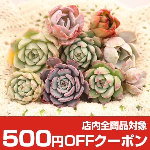 トロピカルガーデン500円OFFクーポン