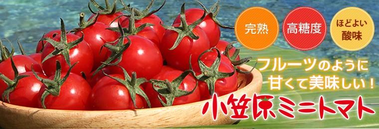 小笠原ミニトマト