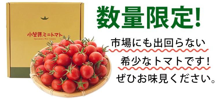 数量限定!市場にも出回らない希少なトマトです!