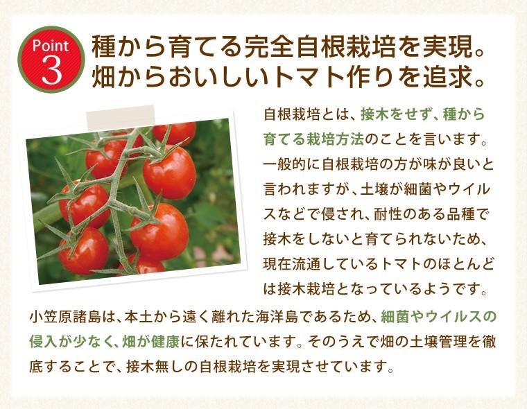 種から育てる完全自根栽培を実現。畑からおいしいトマト作りを追求。