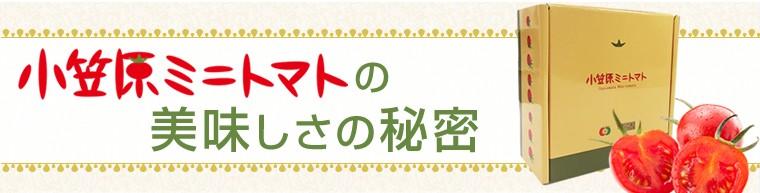 小笠原ミニトマトの秘密