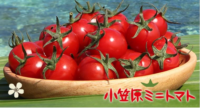 本当のトマトの甘みをギュッと凝縮しました。