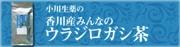 香川産みんなのウラジロガシ茶