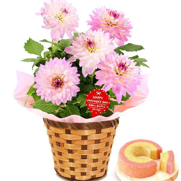 母の日 ギフト 母の日プレゼント ランキング mothersday 2019 花 鉢植え 花 スイーツ|oimoya|22