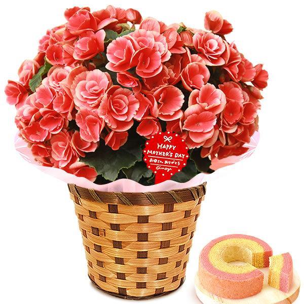 母の日 ギフト 母の日プレゼント ランキング mothersday 2019 花 鉢植え 花 スイーツ|oimoya|14