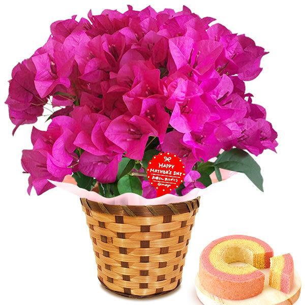 母の日 花 ギフト 母の日プレゼント 2019 mothersday 鉢植え スイーツ カーネーション以外|oimoya|14