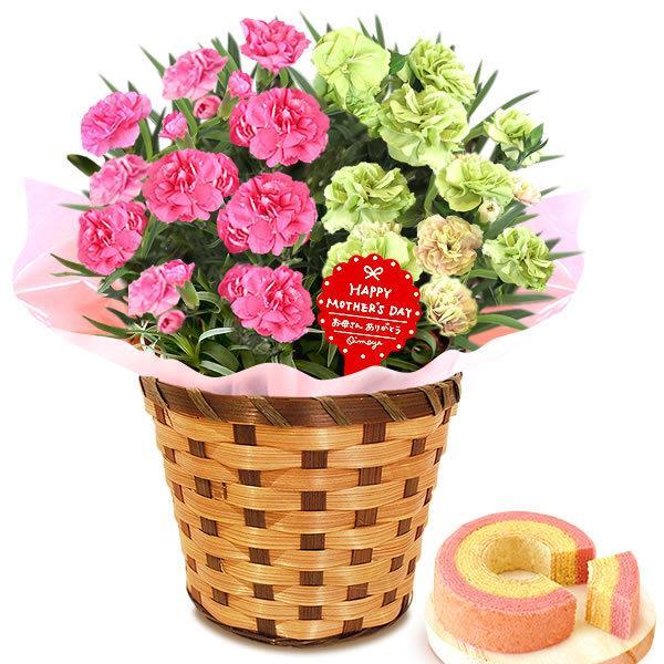 母の日 ギフト 花 母の日 プレゼント カーネーション 鉢植え 花鉢 花とスイーツ 2020 ギフトランキング お菓子|oimoya|24